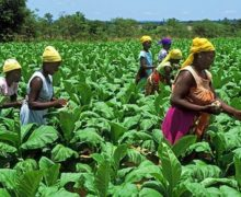 Tanzania Injects $72.4 Million Into Agricultural Sector