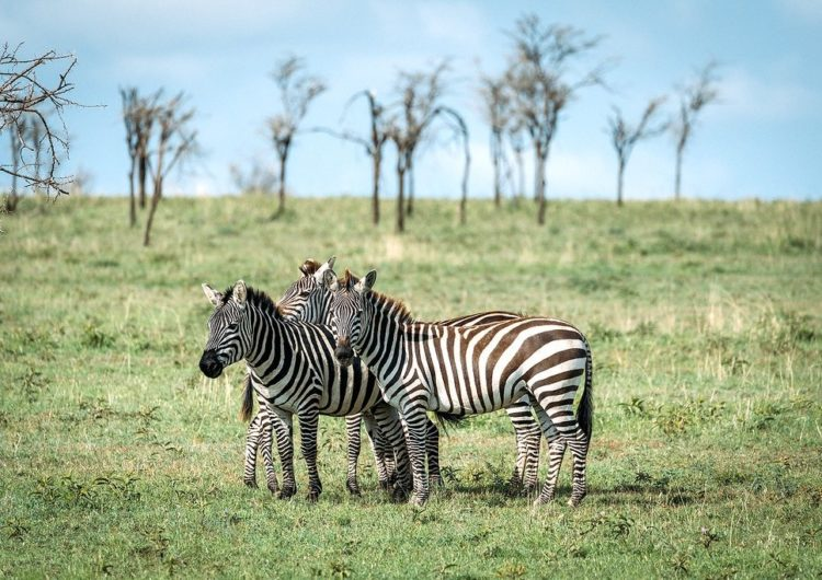 Tanzania Tourism Receives Boost As Tourists Flock In