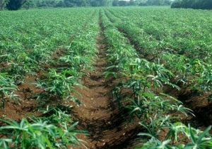 Raising Ghana's Land Productivity Can Transform National Economy, Boost Incomes